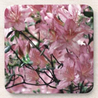 Pink Azalea flowers Beverage Coasters