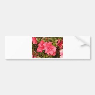 Pink azalea flowers in bloom bumper sticker