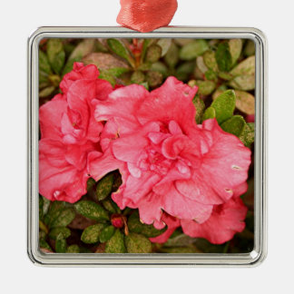 Pink azalea flowers in bloom metal ornament