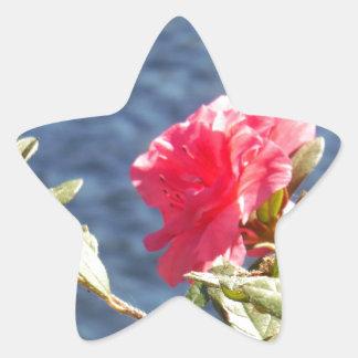 Pink Azalea with Blue Lake Background Star Sticker