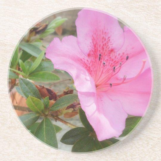 Pink Azaleas 1 Photo Drink Coaster