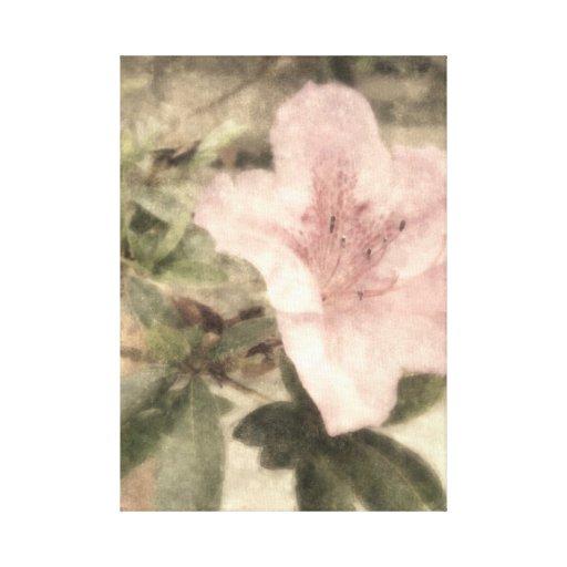 Pink Azaleas 1 Vintage Canvas Print