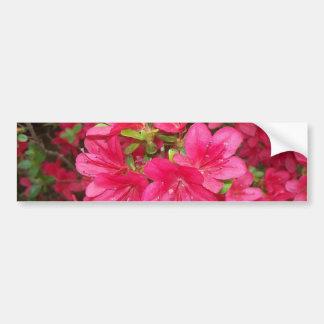 Pink Azaleas Bumper Sticker