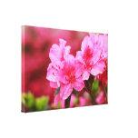 Pink Azaleas Canvas Prints