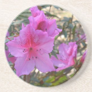 Pink Azaleas Coaster