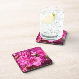 Pink Azaleas Drink Coasters