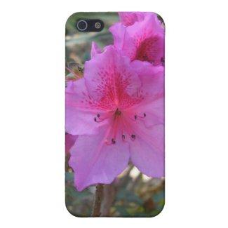 Pink Azaleas Flowers