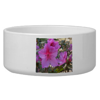Pink Azaleas Flowers Pet Bowl