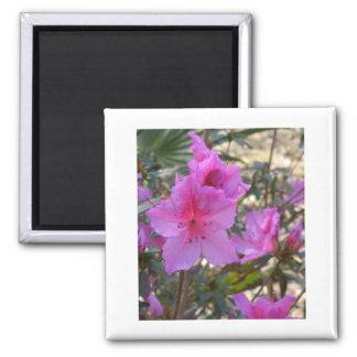 Pink Azaleas Magnet