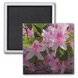 Pink Azaleas Magnet 2 Inch Square Magnet