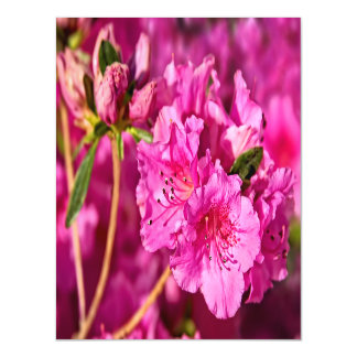 Pink Azaleas Magnetic Card