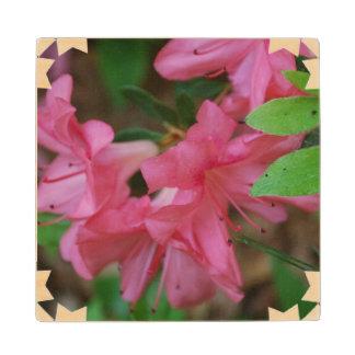 Pink Azaleas Maple Wood Coaster