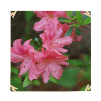 Pink Azaleas Wood Coaster
