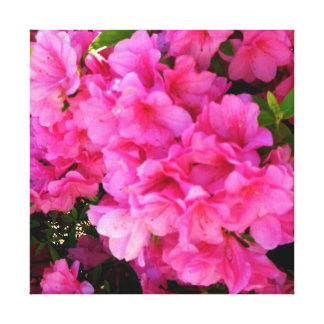 Pink Azaleas of a Southern Spring Wrapped Canvas Gallery Wrapped Canvas