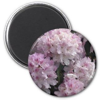 Pink Azaleas, Rhododendron Garden Flowers 2 Inch Round Magnet
