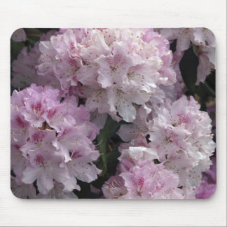 Pink Azaleas, Rhododendron Garden Flowers Mouse Pad
