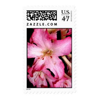 Pink Azaleas Stamp