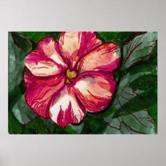 Pink Balsam Flower print