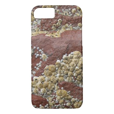 Beach Themed Pink barnacle & limpet iPhone case