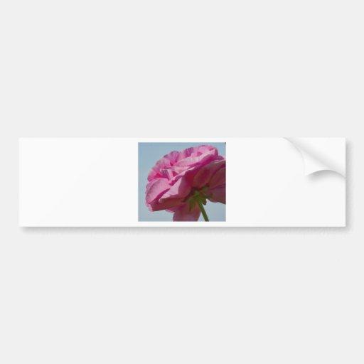 Pink Beauty Car Bumper Sticker