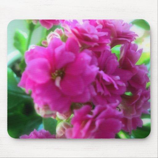 Pink beauty (Kalanchoe blossfeldiana) Tapetes De Ratón