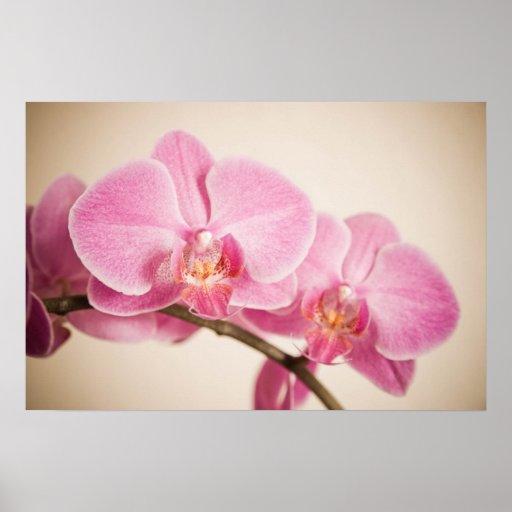 pink beauty posterdrucke