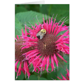 Pink Bee Balm Flower and Honey Bee Card