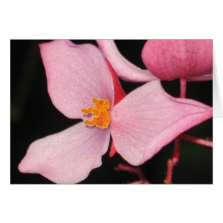 Pink Begonia Card
