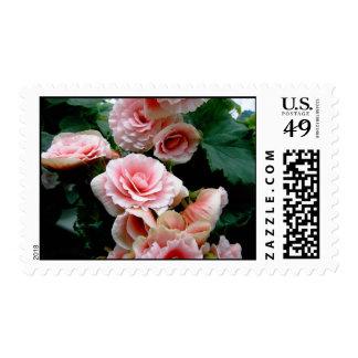 Pink Begonia Flowering Stamp