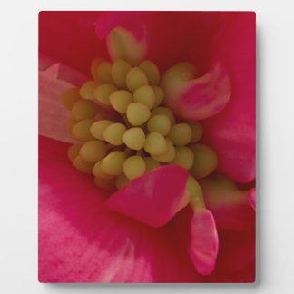 Pink Begonia Stamen Macro Plaque