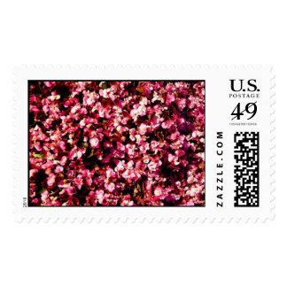 Pink Begonias Stamps