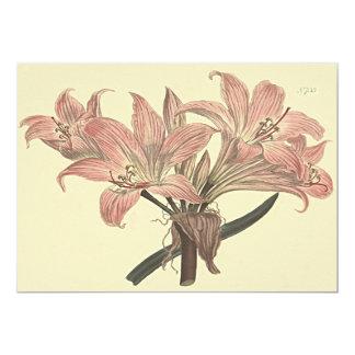 Pink Belladonna Lily Botanical Illustration Card
