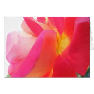 Pink Bicolor Rose V-Day Card
