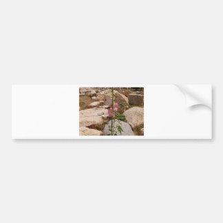 Pink Bindweed Bumper Sticker