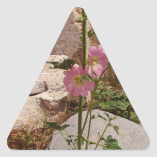 Pink Bindweed Triangle Stickers