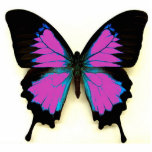 """Pink Black and Blue Butterfly For A Friend Statuette<br><div class=""""desc"""">Great everyday gift. Made of acrylic with metal keyring</div>"""