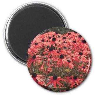 Pink Black Eyed Susan Flower Photography Magnet