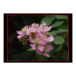 Pink Blackberry Flowers Poster