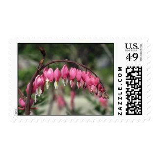 Pink Bleeding Heart, (Dicentra Spectabilis) flower Postage Stamp