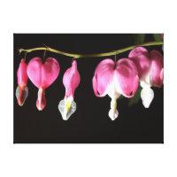 Pink Bleeding Heart Flower Canvas Print