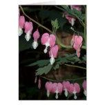 Pink Bleeding Heart Greeting Card
