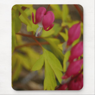 Pink Bleeding Hearts flowers floral photography Mouse Pad