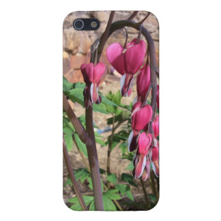 Pink Bleeding Hearts Flowers in Bloom Cover For iPhone SE/5/5s
