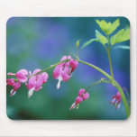 Pink bleeding hearts in garden. Credit as: Mouse Pad