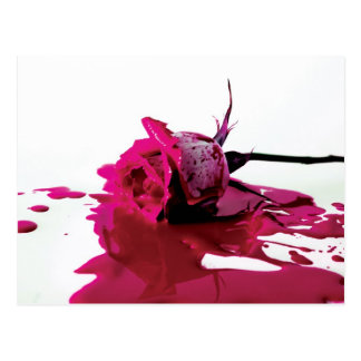 Pink Bleeding Rose Postcard