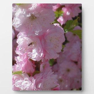 Pink Bloom Display Plaque