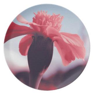 Pink bloom plate