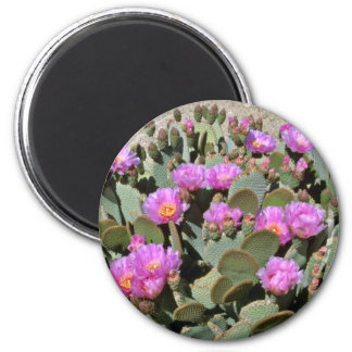 Pink Blooms On Beavertail Cactus flowers Magnets