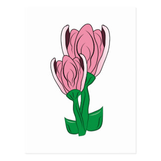 Pink Blooms Postcard