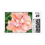 pink blossom postage stamps